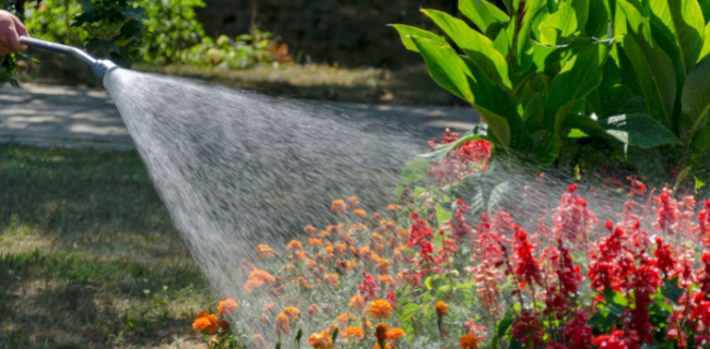 Water the plants:
